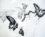 No Butterflies WIP by C-S-Marcy
