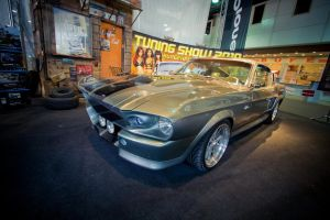 Shelby Eleanor by miki3d