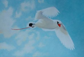 Red-tailed tropicbird by MedeiaDesigns