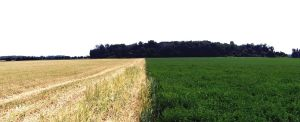 Two-Tone Field by WithoutName