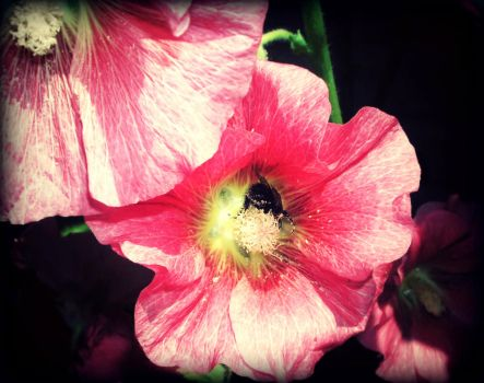 Busy Bee by ConnieLynnArt