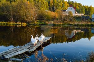 Autumn Geese 2 by Lubov2001