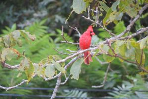 Little Red Bird by hkane5