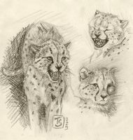 Cheetahs scraps by TS-cat