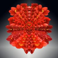 Red Lilly copy by bugtussle