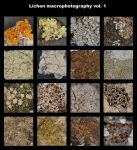 Macrophotography of lichens 1 by fungi-club