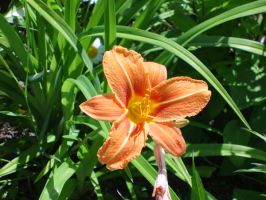 Flowers - Orange Lily 3. by MystStock