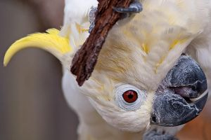 Longleat Cockatoo by garethjns