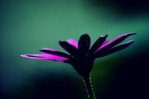 flower by bassemhany