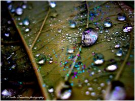 . Water drops II . by KimikoTakeshita