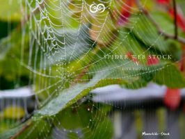 Spider Web Pack V Stock by Moonchilde-Stock