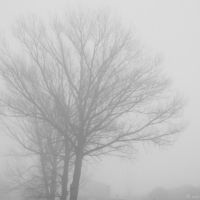 Niebla by NNarcissus