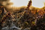 Cobweb in the morning sun by NicoFroehberg