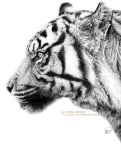 Like a Tiger Without Whiskers by Junryou-na-Kokoro