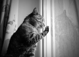 Cat in an empty apartment. by AHilda