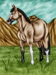 Payment picture 3/3 : Rafael DIC's by Golden-Horse-Stables