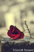 Tale of the Rose: The Love by goth-primer