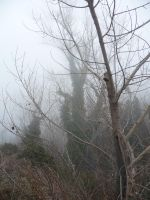 Misty trees above the river by emperorkk
