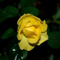 evening yellow by st2wok