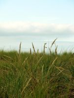 Sea Grass by thiselectricheart