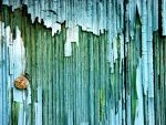 More Peeling Paint by frickinducky