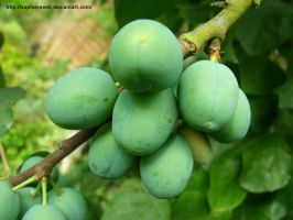 Green Plums by sophierevell