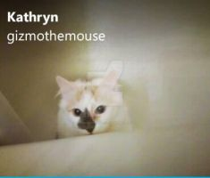 this is my skype. by kathrynthewolf135