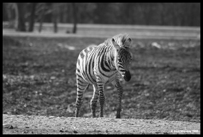 Black And White by kittywinter
