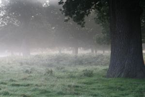 Stock... Misty Richmond Park by RhysBriers