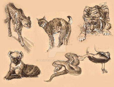 Animal Sketches - Part 1 by BasquesArt
