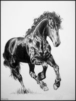 Drawing-Friesian horse by Ennete