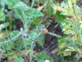 Spider in web series one 02 by teletran