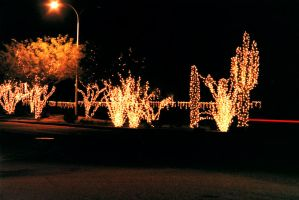 Southwest Christmas by amosis55