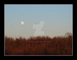 As The Moon Slowly Rises 2 by jdzign45