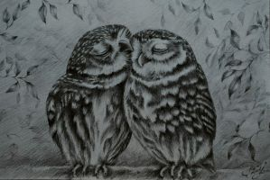 Cute owls by bilberry-art
