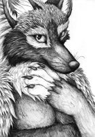 Sebastian Silverfox in Pencil by sebastiangreyfox