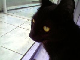 My Black Cat by Donyle