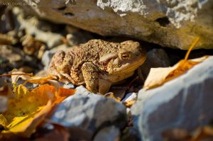 The frog by ivancoric