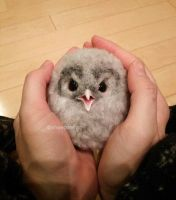 Baby owl 1 by sheeps-wing