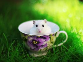 HAMSTER by CassiesCrue