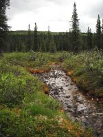 Creek in the Wilderness 3 by prints-of-stock