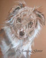 Aussie in pastels by Jniq