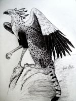 Cheetah gryphon by damein1234
