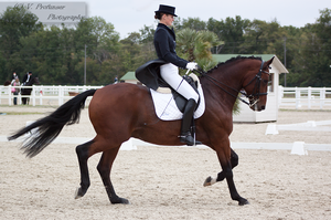 Dressage Cup_184 by CalyHoney