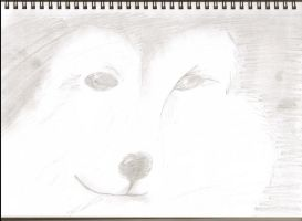 Sheltland Dog Pencil Sketch by ThatChickWithDaPony
