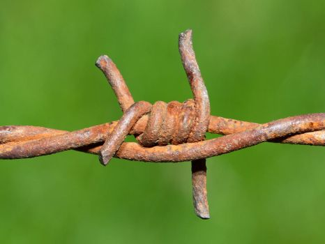 barbed wire by roki