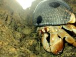 Hermit Crab by Sof-mq