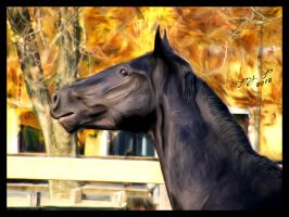 Horse by CoPy-Cp