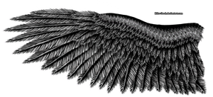 Black Steel Eagle Wing by K1ku-Stock