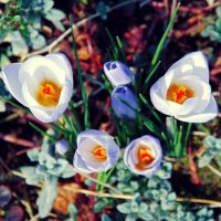 .:The  Colors Of Spring:. by BlueColoursOfNature